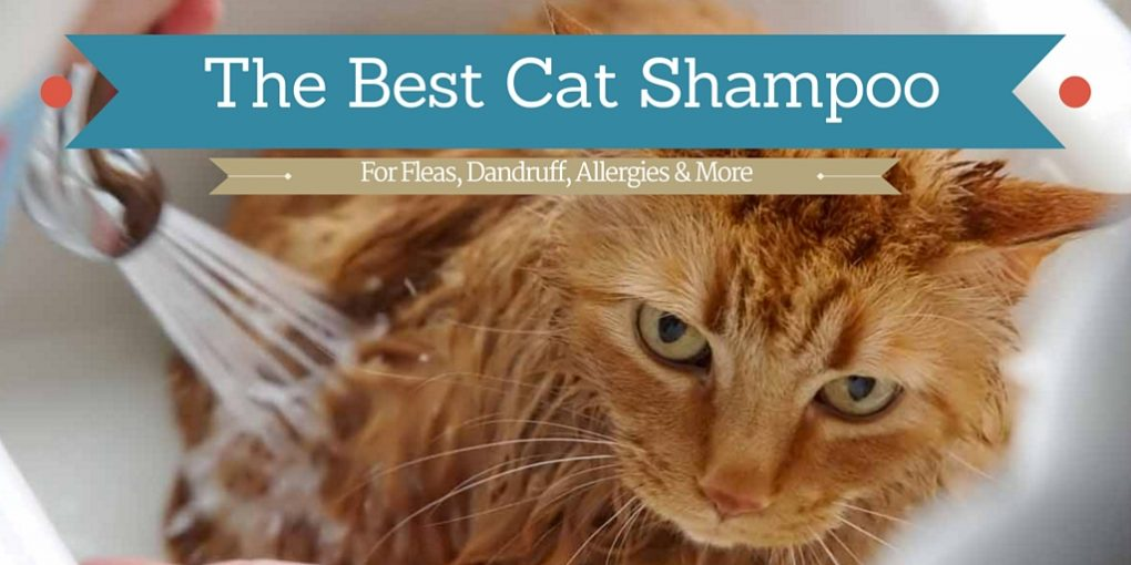 best cat shampoos for fleas dandruff allergies and more