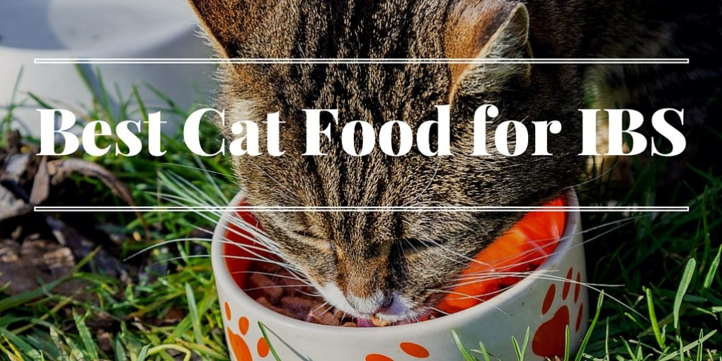 Best cat food for ibs symptoms