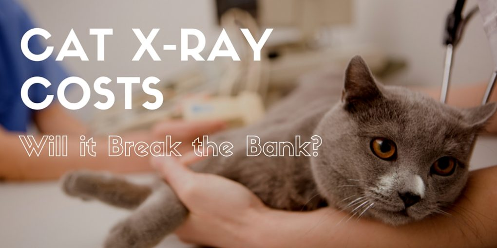 cat x-ray costs - how much on average are they?