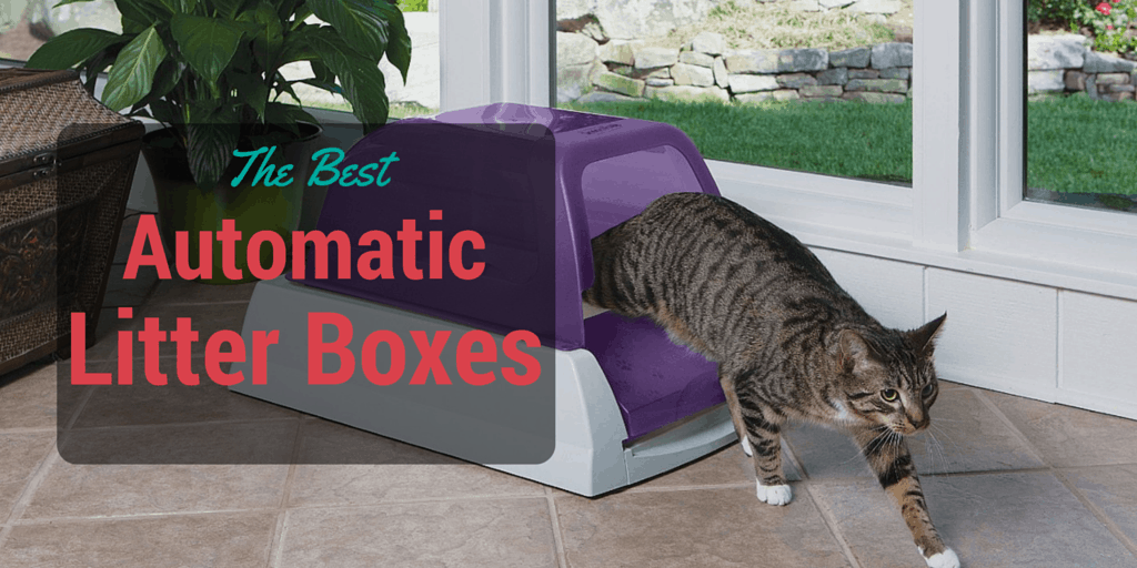 best automatic litter boxes 2016