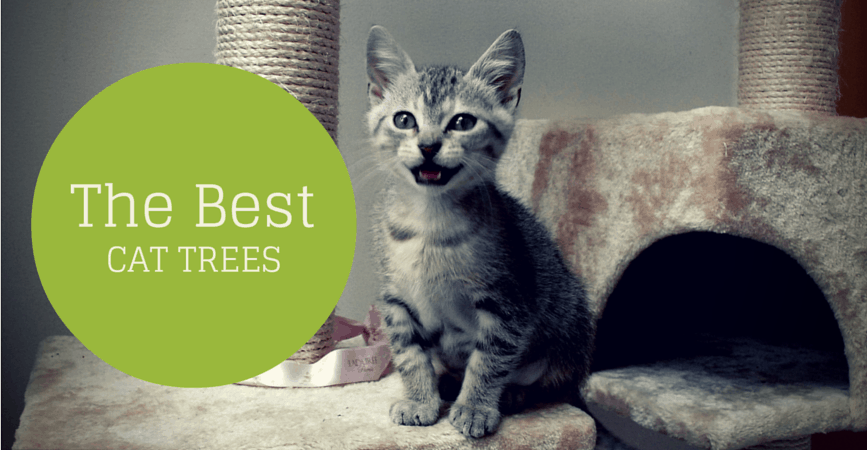 Best Cat Trees of 2016 Comparison