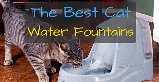 Best Cat Water Fountains of 2016