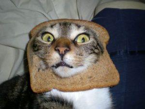 Bildresultat för toast cat