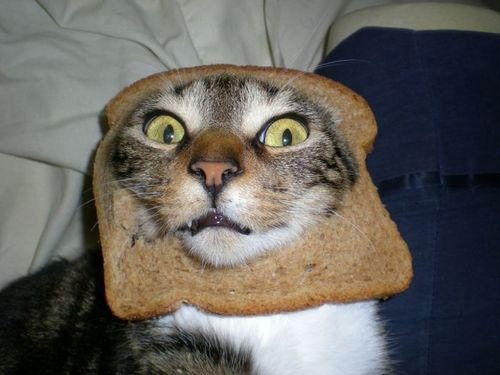 can cats eat toast
