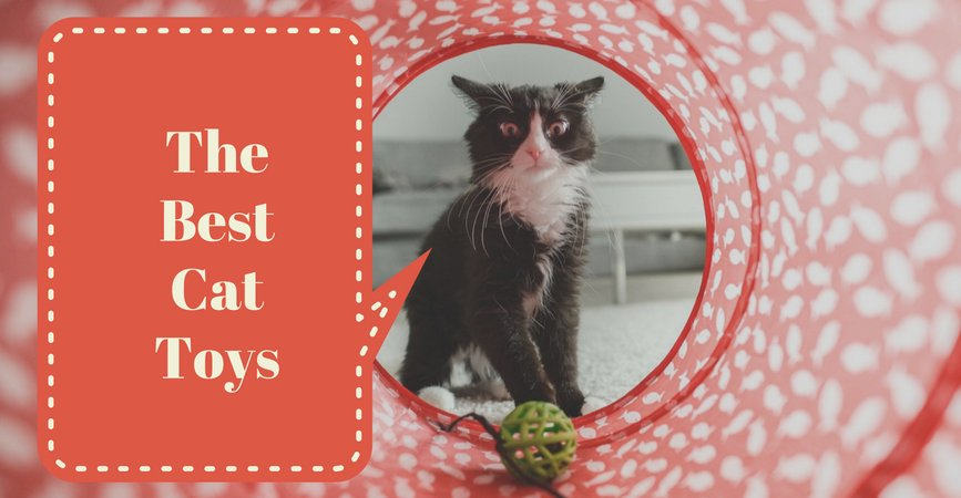 The 15 Best Cat Toys