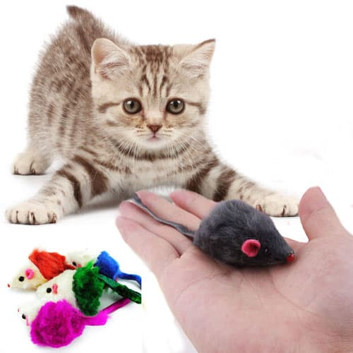 A Kitten Playing with a Mouse Toy