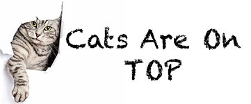 Cats Are On Top