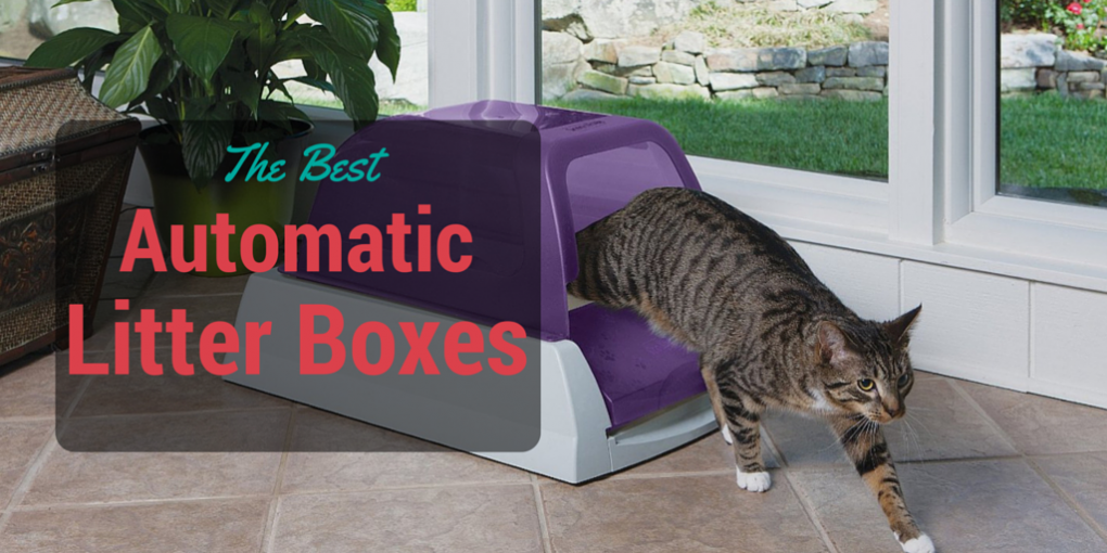 the best automatic litter boxes: 2017 Reviews