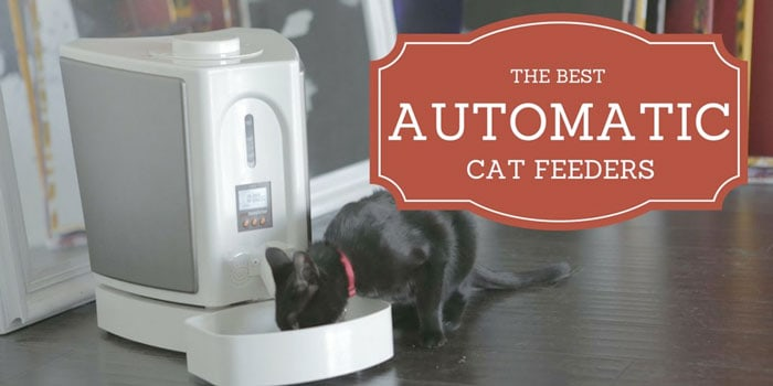 best automatic cat feeder reviews 2017 comparison