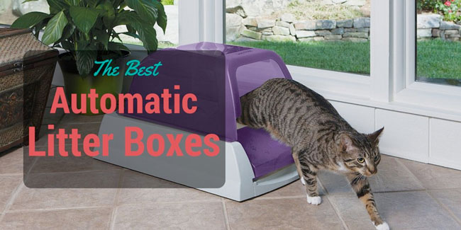 best automatic & self cleaning litter box reviews 2017