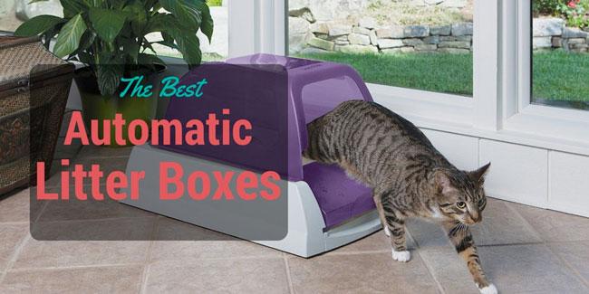 Multiple Cats Single Litter Box