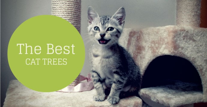 best cat tree reviews of 2017 comparison table