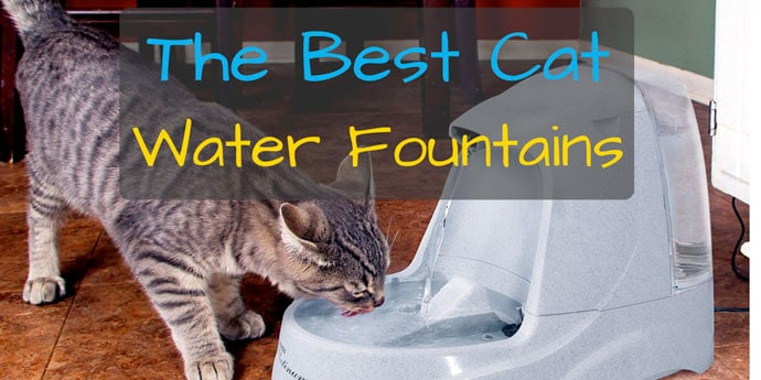 the best cat water fountain reviews 2017 comparison