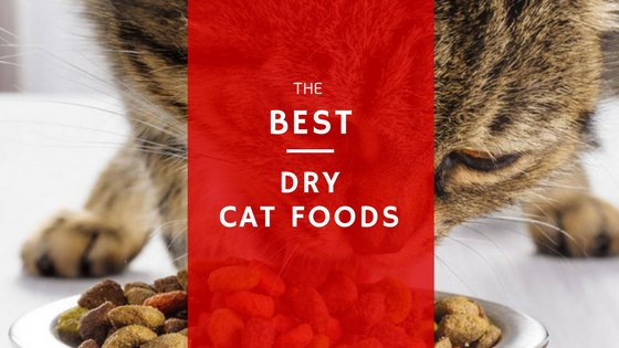 best dry cat foods