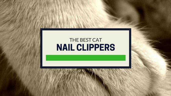 best trimmers and clippers for cat nails