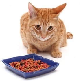cat eating their kibble food from a bowl