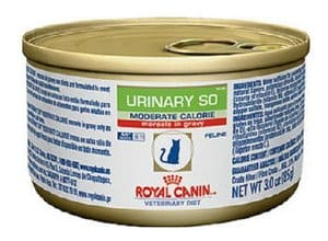 Royal Canin Cat Food Suppliers