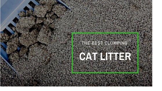 best clumping cat litter reviews