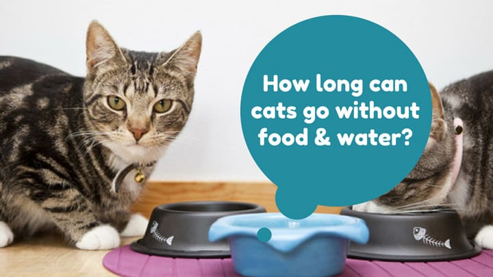 cats-live-without-food-water