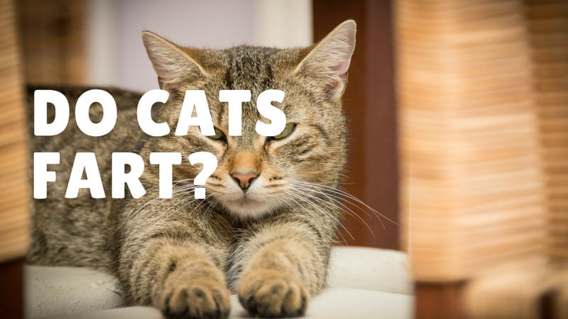 low protein diet for cats