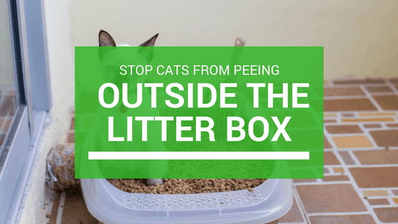 stop cats peeing outside the litter box