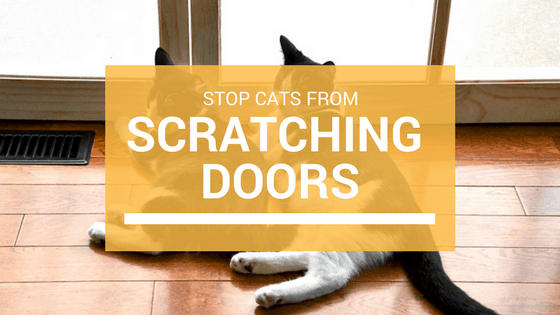 Get Cat To Stop Scratching Doors