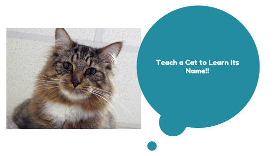 teach a cat its name - how to do it