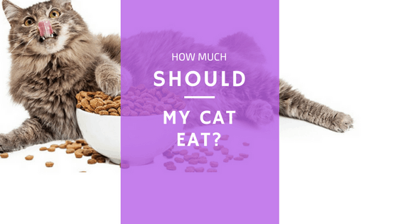 how much food should cats be eating