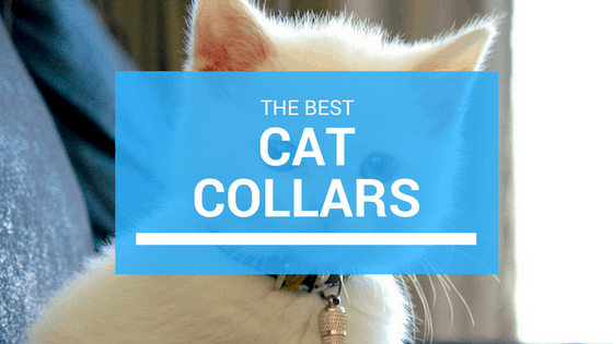 best cat collar pics