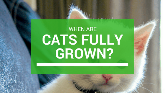 stages of growth for cats