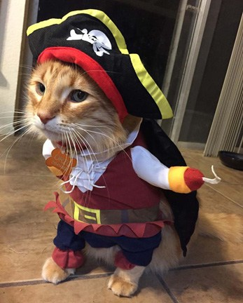 The Best Halloween Costumes for Cats | Cats Are On Top