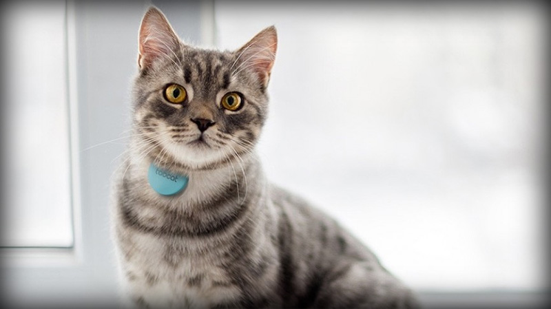 Choosing the Greatest GPS Kitten Locator Collar