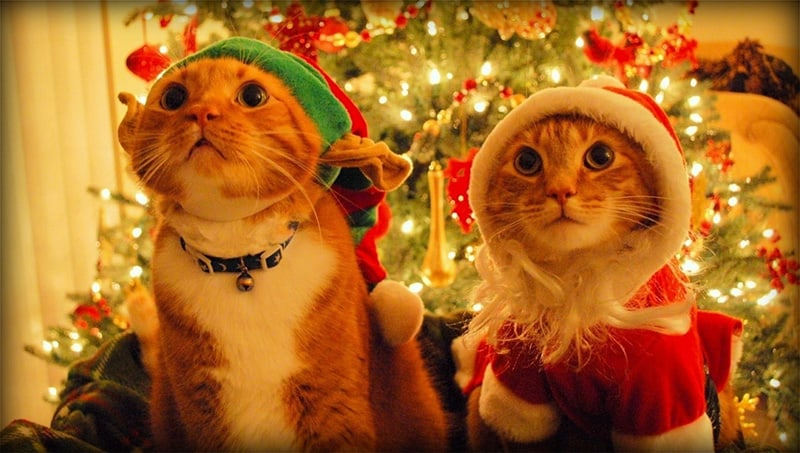 Christmas gift ideas cat lovers