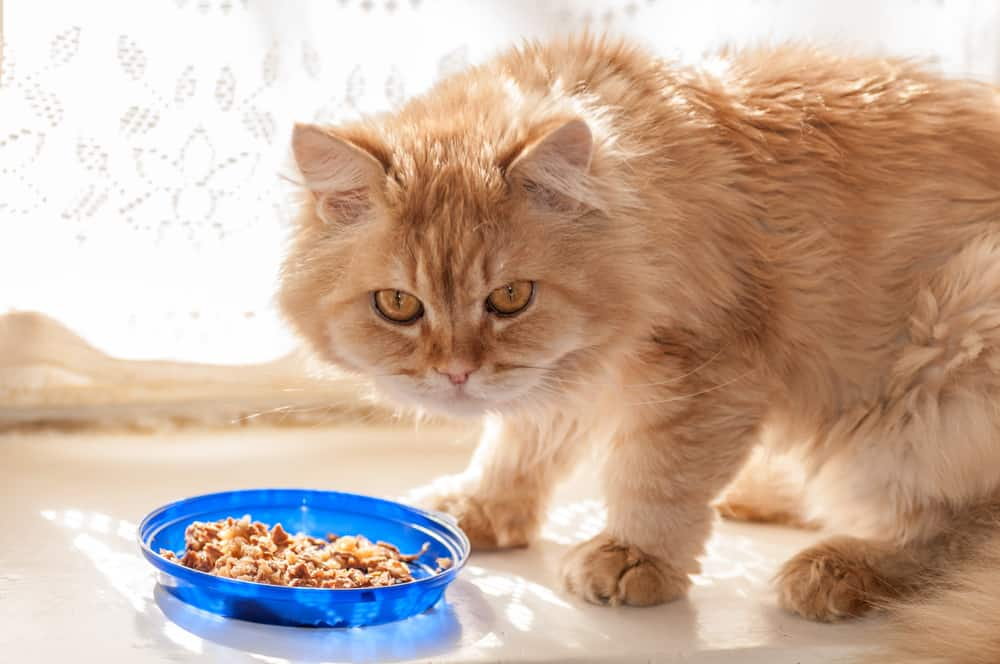 What Are the Pros and Cons of Making My Own Cat Food?